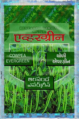 evergreen-choli